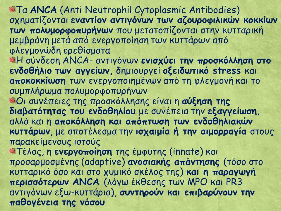 Τα ANCA (Anti Neutrophil Cytoplasmic Antibodies) σχηματίζονται εναντίον αντιγόνων των αζουροφιλικών κοκκίων των πολυμορφοπυρήνων που μετατοπίζονται στην κυτταρική μεμβράνη μετά από ενεργοποίηση των κυττάρων από φλεγμονώδη ερεθίσματα Η σύνδεση ANCA- αντιγόνων ενισχύει την προσκόλληση στο ενδοθήλιο των αγγείων, δημιουργεί οξειδωτικό stress και αποκοκκίωση των ενεργοποιημένων από τη φλεγμονή και το συμπλήρωμα πολυμορφοπυρήνων Οι συνέπειες της προσκόλλησης είναι η αύξηση της διαβατότητας του ενδοθηλίου με συνέπεια την εξαγγείωση, αλλά και η αποκόλληση και απόπτωση των ενδοθηλιακών κυττάρων, με αποτέλεσμα την ισχαιμία ή την αιμορραγία στους παρακείμενους ιστούς Τέλος, η ενεργοποίηση της έμφυτης (innate) και προσαρμοσμένης (adaptive) ανοσιακής απάντησης (τόσο στο κυτταρικό όσο και στο χυμικό σκέλος της) και η παραγωγή περισσότερων ANCA (λόγω έκθεσης των MPO και PR3 αντιγόνων εξω-κυττάρια), συντηρούν και επιβαρύνουν την παθογένεια της νόσου
