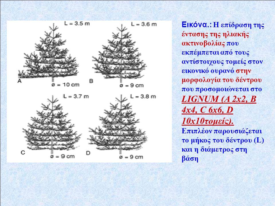 Εικόνα.: Η επίδραση της έντασης της ηλιακής ακτινοβολίας που εκπέμπεται από τους αντίστοιχους τομείς στον εικονικό ουρανό στην μορφολογία του δέντρου που προσομοιώνεται στο LIGNUM (Α 2x2, Β 4x4, C 6x6, D 10x10τομείς).