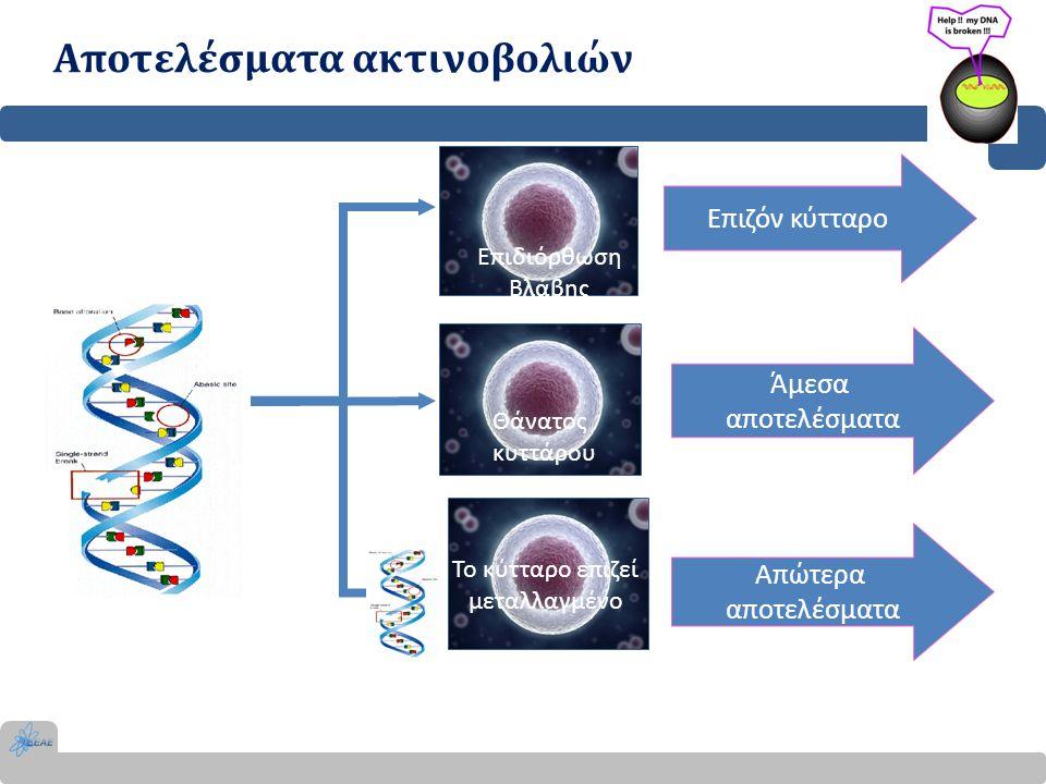 Αποτελέσματα ακτινοβολιών (ΑΜΕΣΑ) Ερύθημα, καταρράκτης, νέκρωση δέρματος Άμεση εμφάνιση αποτελεσμάτων (ημέρες – εβδομάδες, εξαίρεση καταρράκτης) Ύπαρξη κατώτατου ορίου δόσης – κατώφλι (συγκεκριμένο για κάθε αποτέλεσμα) Κάτω από το κατώφλι δόσης δεν υπάρχει αποτέλεσμα Πάνω από το κατώτατο όριο η σοβαρότητα εξαρτάται από τη δόση Δόση Πιθανότητα Κατώφλι Δόση Σοβαρότητα