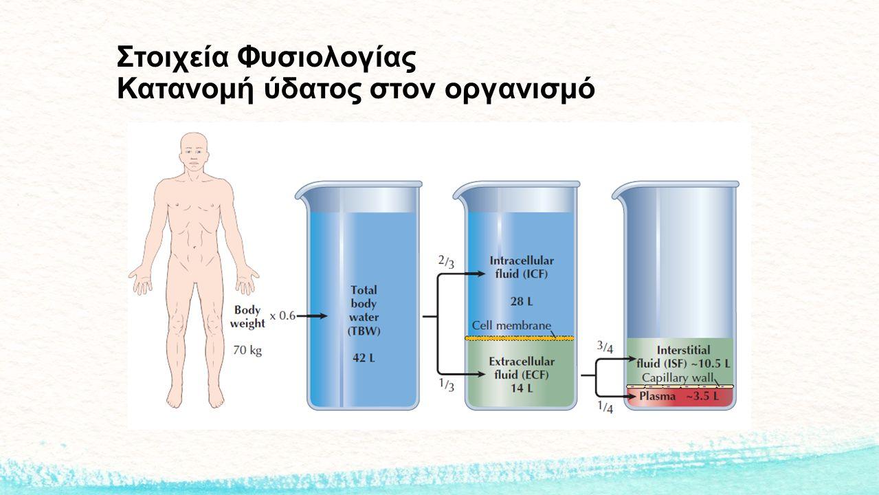 Στοιχεία Φυσιολογίας Κατανομή ύδατος στον οργανισμό