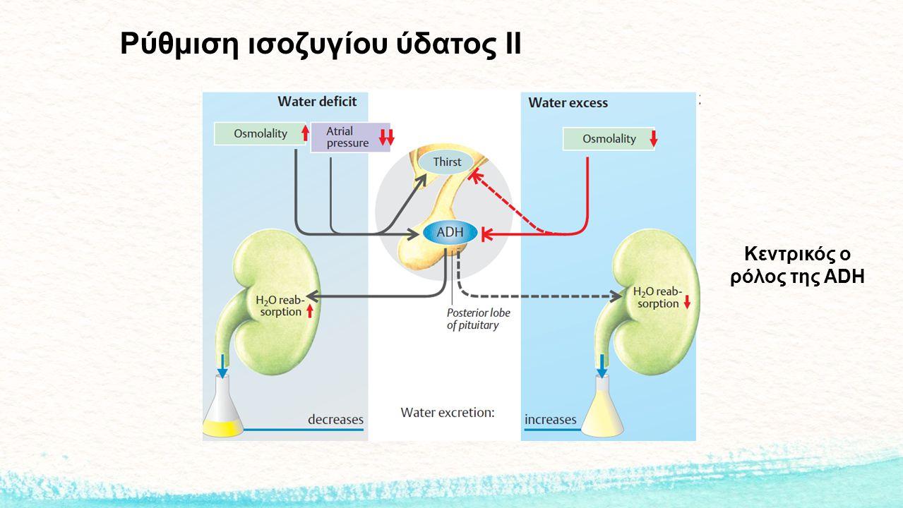 Ρύθμιση ισοζυγίου ύδατος ΙΙ Κεντρικός ο ρόλος της ADH