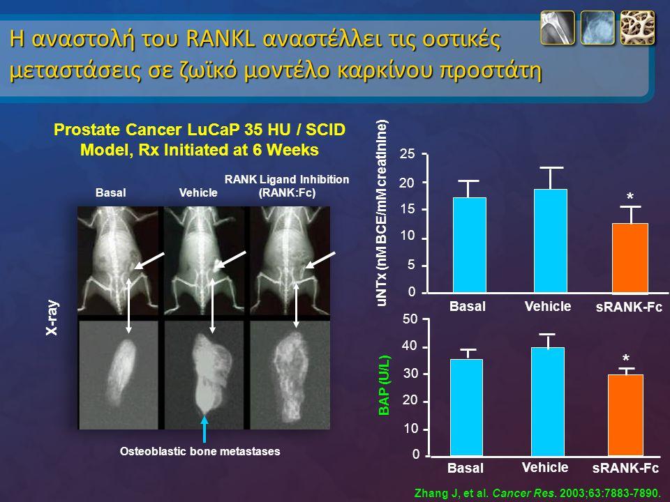 Zhang J, et al. Cancer Res. 2003;63:7883-7890. Η αναστολή του RANKL αναστέλλει τις οστικές μεταστάσεις σε ζωϊκό μοντέλο καρκίνου προστάτη 50 40 30 20