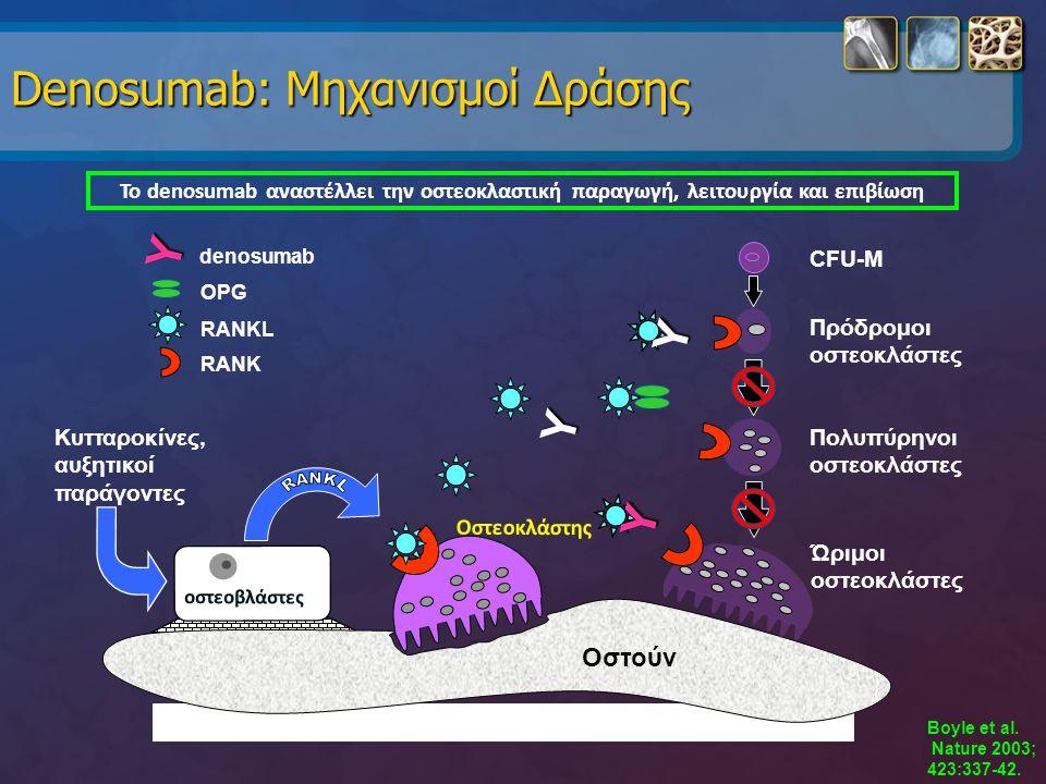 Denosumab: Μηχανισμοί Δράσης Το denosumab αναστέλλει την οστεοκλαστική παραγωγή, λειτουργία και επιβίωση Boyle et al. Nature 2003; 423:337-42. Ώριμοι