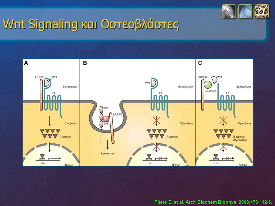 Wnt Signaling και Οστεοβλάστες Piters E, et al. Arch Biochem Biophys. 2008;473:112-6.