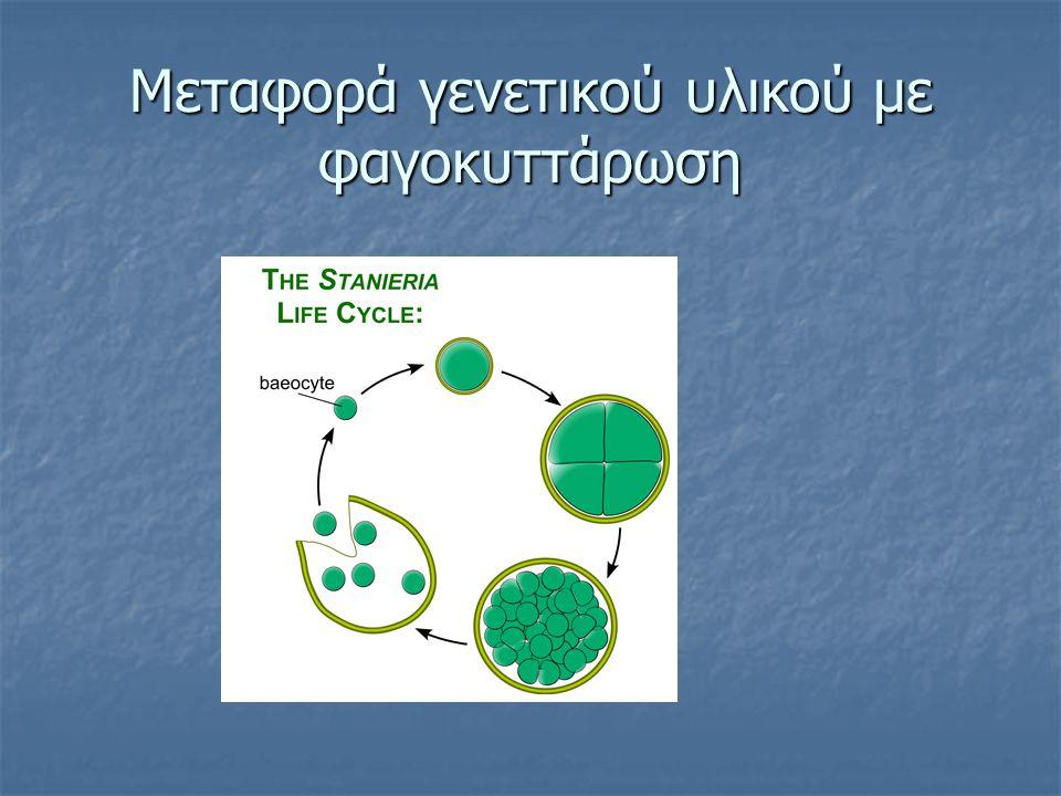 Μεταφορά γενετικού υλικού με φαγοκυττάρωση