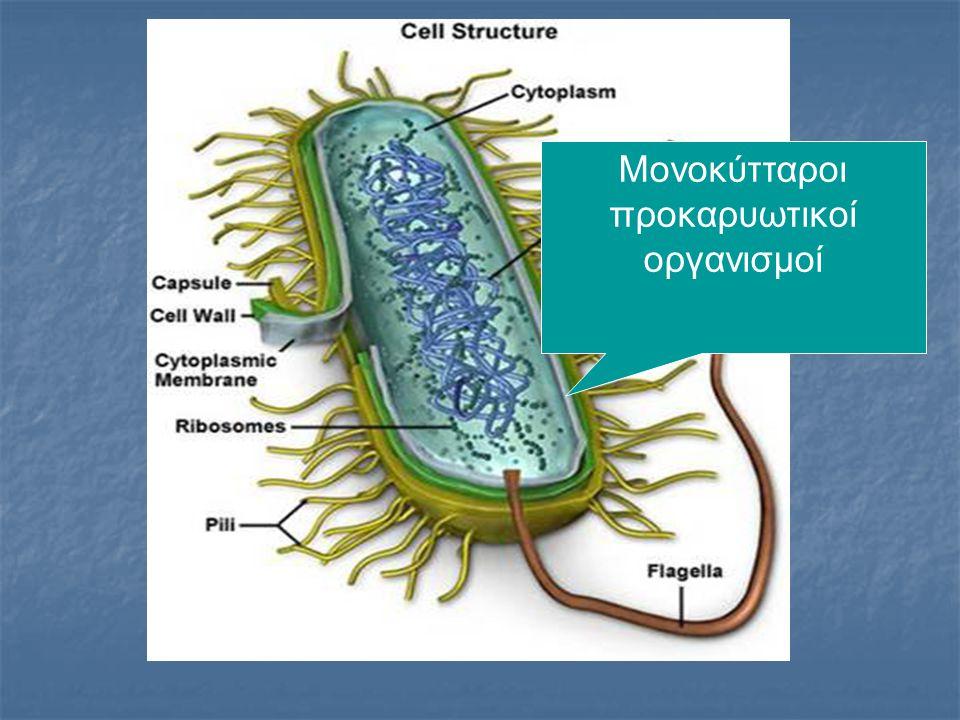 Μονοκύτταροι προκαρυωτικοί οργανισμοί