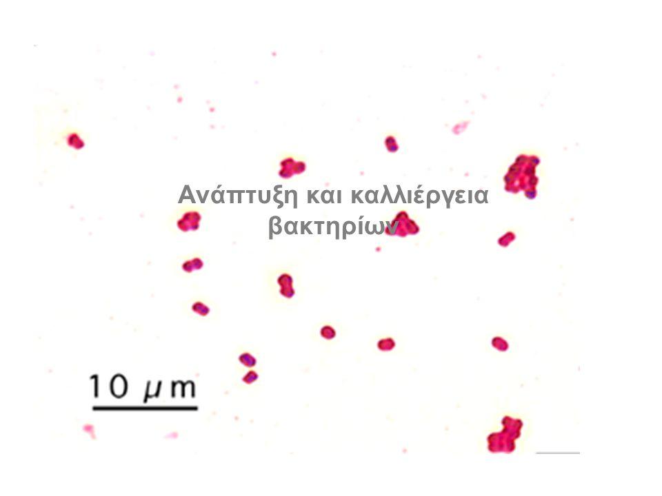 Ανάτυξη και καλλιέργεια βακτηρίων Ανάπτυξη και καλλιέργεια βακτηρίων