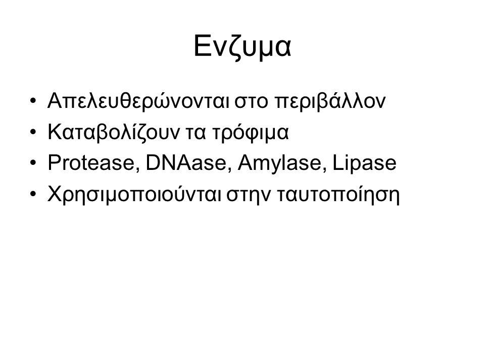 Ενζυμα Απελευθερώνονται στο περιβάλλον Καταβολίζουν τα τρόφιμα Protease, DNAase, Amylase, Lipase Χρησιμοποιούνται στην ταυτοποίηση