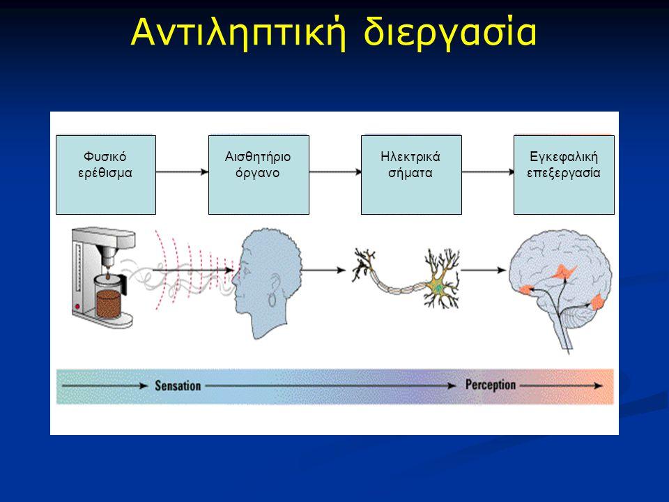 Αντιληπτική διεργασία Φυσικό ερέθισμα Αισθητήριο όργανο Ηλεκτρικά σήματα Εγκεφαλική επεξεργασία