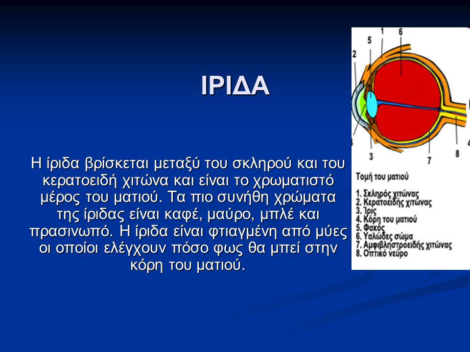 ΙΡΙΔΑ Η ίριδα βρίσκεται μεταξύ του σκληρού και του κερατοειδή χιτώνα και είναι το χρωματιστό μέρος του ματιού. Τα πιο συνήθη χρώματα της ίριδας είναι
