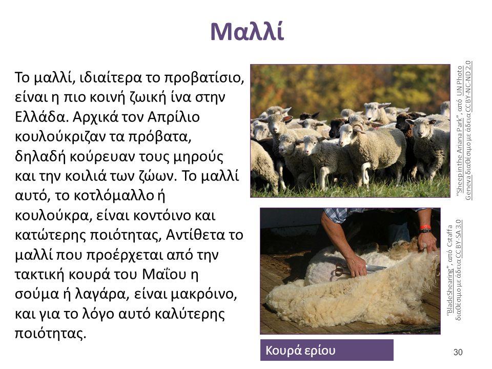 Μαλλί Το μαλλί, ιδιαίτερα το προβατίσιο, είναι η πιο κοινή ζωική ίνα στην Ελλάδα. Αρχικά τον Απρίλιο κουλούκριζαν τα πρόβατα, δηλαδή κούρευαν τους μηρ