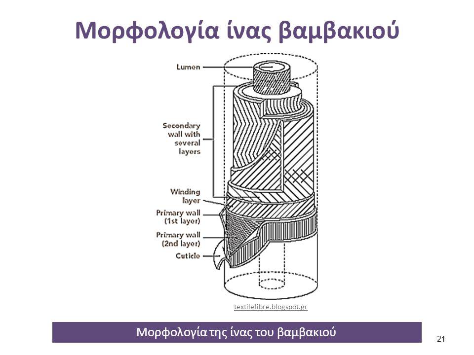 Μορφολογία ίνας βαμβακιού Μορφολογία της ίνας του βαμβακιού textilefibre.blogspot.gr 21