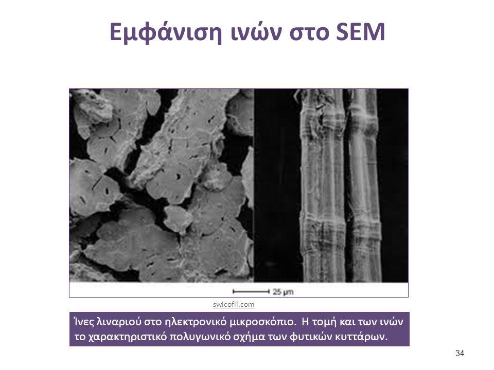 Εμφάνιση ινών στο SEM Ίνες λιναριού στο ηλεκτρονικό μικροσκόπιο. Η τομή και των ινών το χαρακτηριστικό πολυγωνικό σχήμα των φυτικών κυττάρων. swicofil