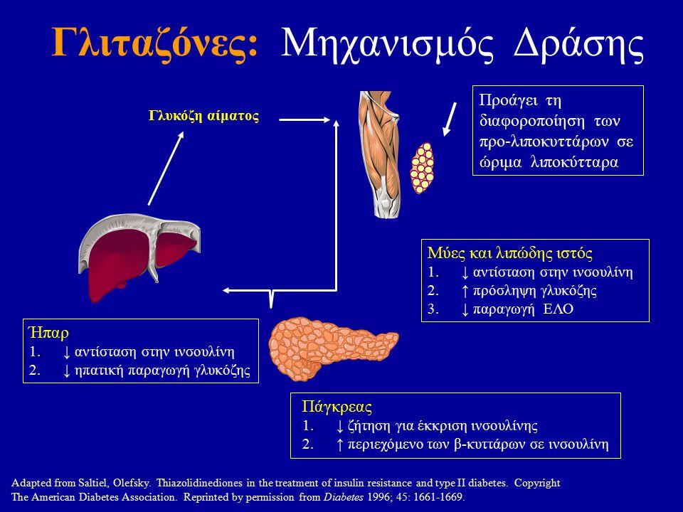 Γλιταζόνες: Μηχανισμός Δράσης Μύες και λιπώδης ιστός 1.↓ αντίσταση στην ινσουλίνη 2.↑ πρόσληψη γλυκόζης 3.↓ παραγωγή ΕΛΟ Ήπαρ 1.↓ αντίσταση στην ινσουλίνη 2.↓ ηπατική παραγωγή γλυκόζης Γλυκόζη αίματος Πάγκρεας 1.↓ ζήτηση για έκκριση ινσουλίνης 2.↑ περιεχόμενο των β-κυττάρων σε ινσουλίνη Adapted from Saltiel, Olefsky.