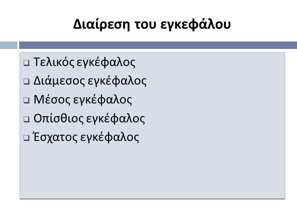 Διαίρεση του εγκεφάλου  Τελικός εγκέφαλος  Διάμεσος εγκέφαλος  Μέσος εγκέφαλος  Ο π ίσθιος εγκέφαλος  Έσχατος εγκέφαλος  Τελικός εγκέφαλος  Διάμεσος εγκέφαλος  Μέσος εγκέφαλος  Ο π ίσθιος εγκέφαλος  Έσχατος εγκέφαλος
