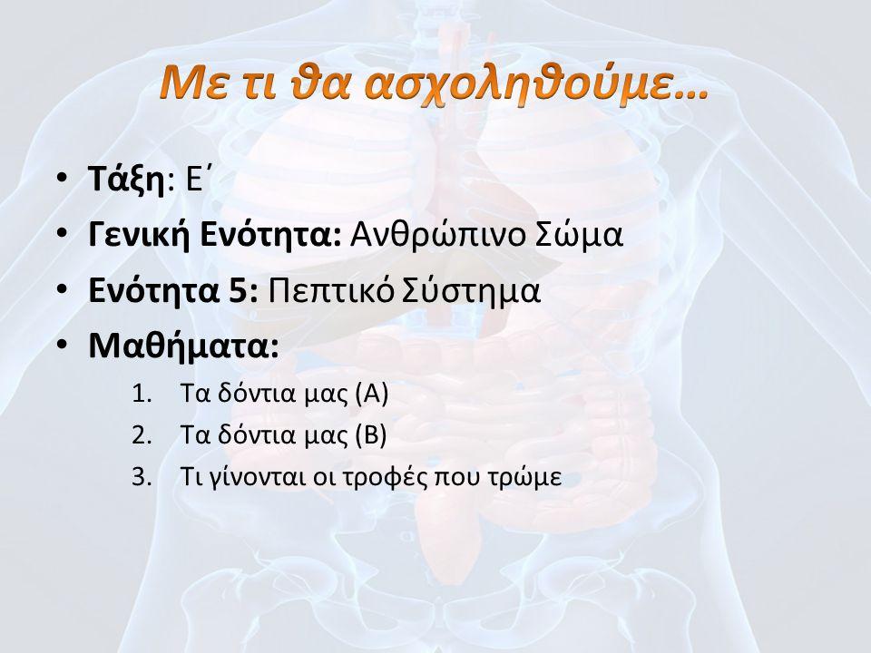Τάξη: Ε΄ Γενική Ενότητα: Ανθρώπινο Σώμα Ενότητα 5: Πεπτικό Σύστημα Μαθήματα: 1.Τα δόντια μας (Α) 2.Τα δόντια μας (Β) 3.Τι γίνονται οι τροφές που τρώμε