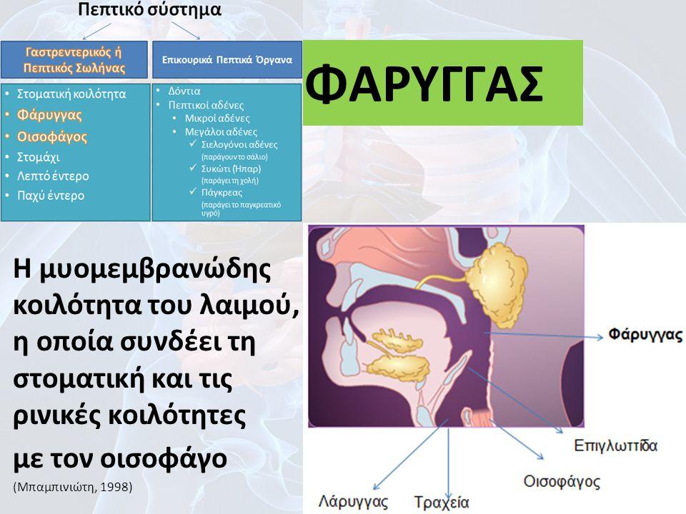 Η μυομεμβρανώδης κοιλότητα του λαιμού, η οποία συνδέει τη στοματική και τις ρινικές κοιλότητες με τον οισοφάγο (Μπαμπινιώτη, 1998) 23 ΦΑΡΥΓΓΑΣ