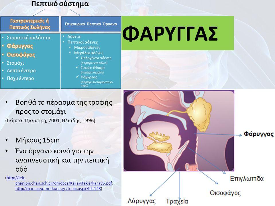 Βοηθά το πέρασμα της τροφής προς το στομάχι (Γκίμπα-Τζιαμπίρη, 2001; Ηλιάδης, 1996) Μήκους 15cm Ένα όργανο κοινό για την αναπνευστική και την πεπτική