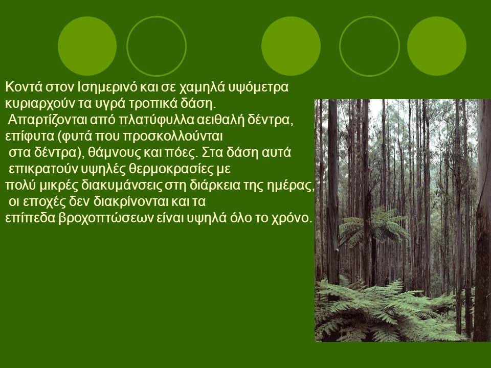 Κοντά στον Ισημερινό και σε χαμηλά υψόμετρα κυριαρχούν τα υγρά τροπικά δάση. Απαρτίζονται από πλατύφυλλα αειθαλή δέντρα, επίφυτα (φυτά που προσκολλούν