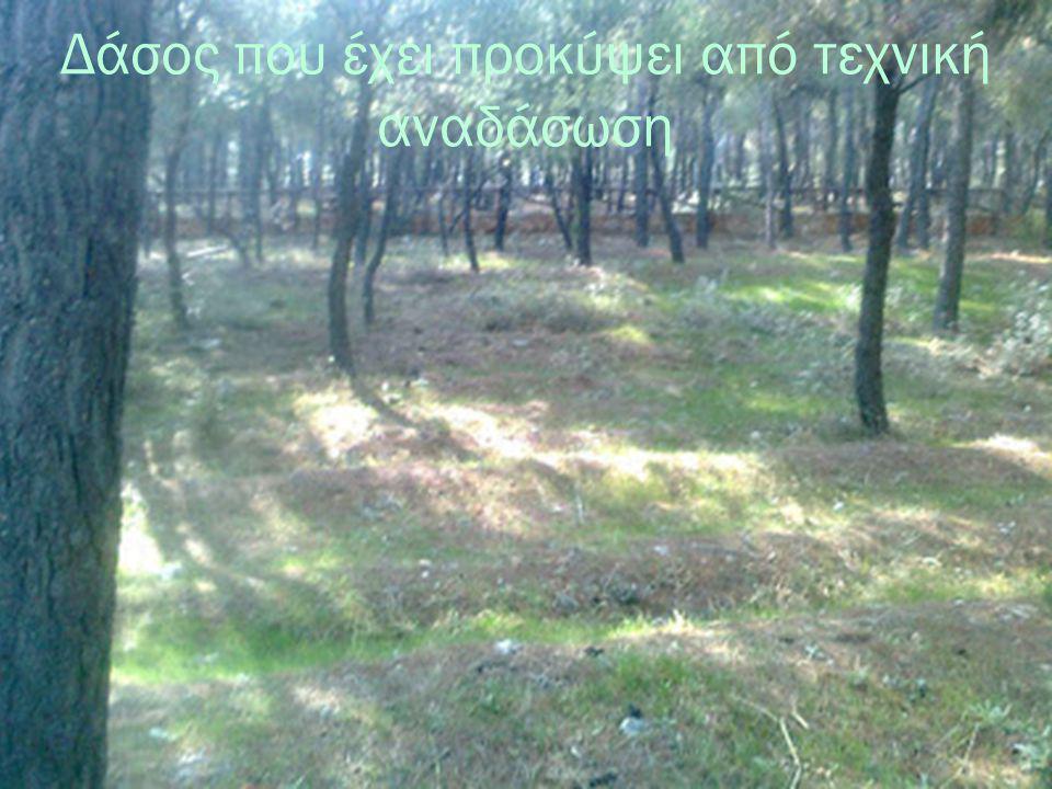 Δάσος που έχει προκύψει από τεχνική αναδάσωση