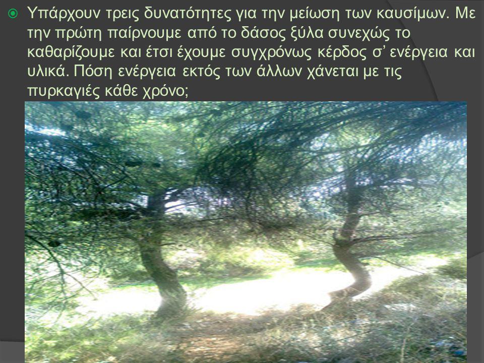 Η δεύτερη δυνατότητα είναι να επιτρέψουμε βόσκηση, φυσικά ελεγχόμενη, μέσα στα δάση.