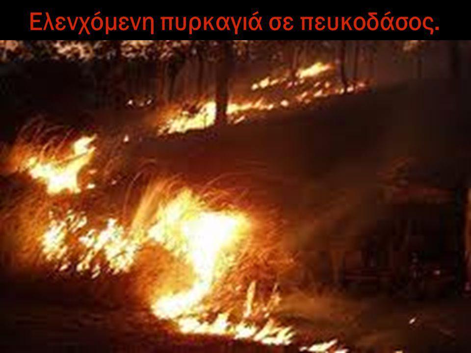 Ελενχόμενη πυρκαγιά σε πευκοδάσος.