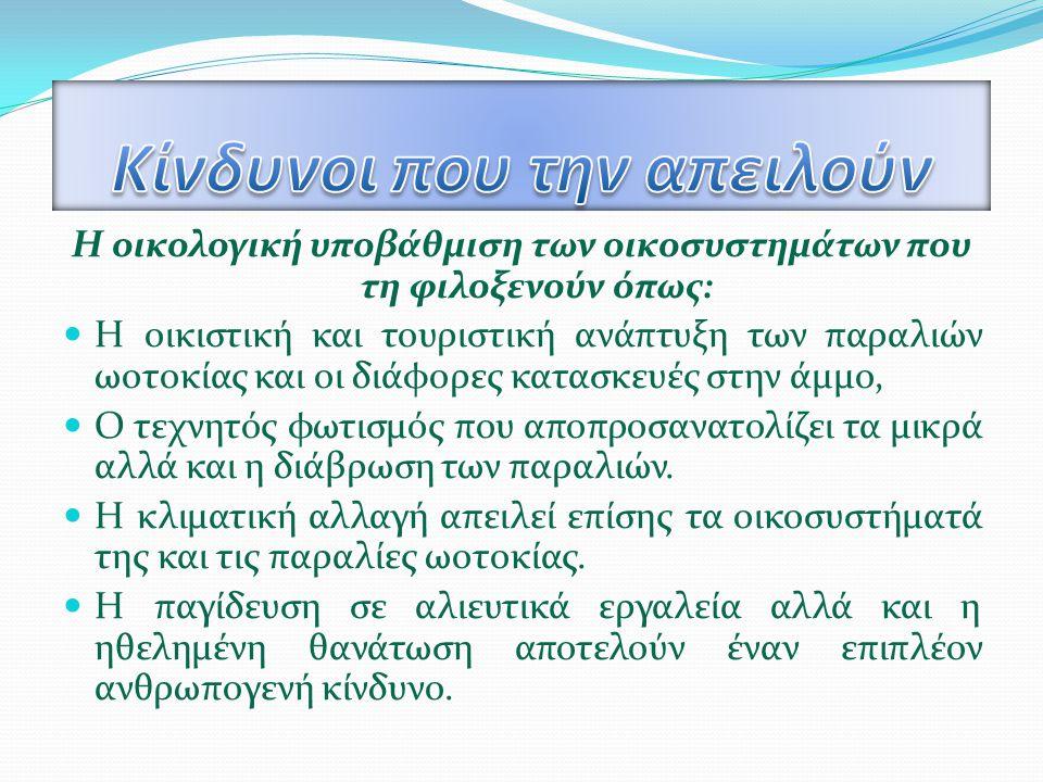Η Μεσογειακή φώκια (Monachus- monachus) Είναι ένα αναπόσπαστο κομμάτι του χθες, του σήμερα και του αύριο των ελληνικών θαλασσών και της Μεσογείου.