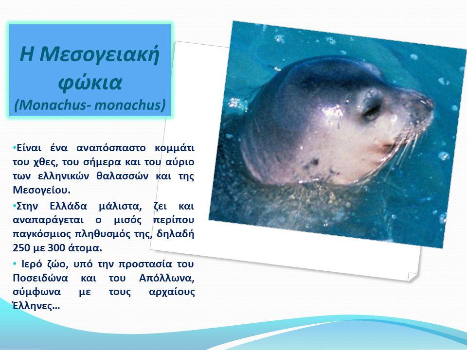 Η μείωση τροφής, η τυχαία παγίδευση κατά τις αλιευτικές δραστηριότητες και η ηθελημένη θανάτωση.