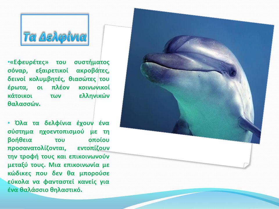 Απειλές των δελφινιών Δυστυχώς όμως, παρότι είναι τόσο αξιαγάπητα, ο άνθρωπος παραμένει ο μοναδικός φυσικός τους εχθρός.