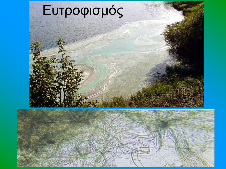 Βιοσυσσώρευση Τα απόβλητα των βιομηχανιών περιέχουν βαριά μέταλλα, οργανικούς διαλύτες, πετρελαιοειδή κ.ά.