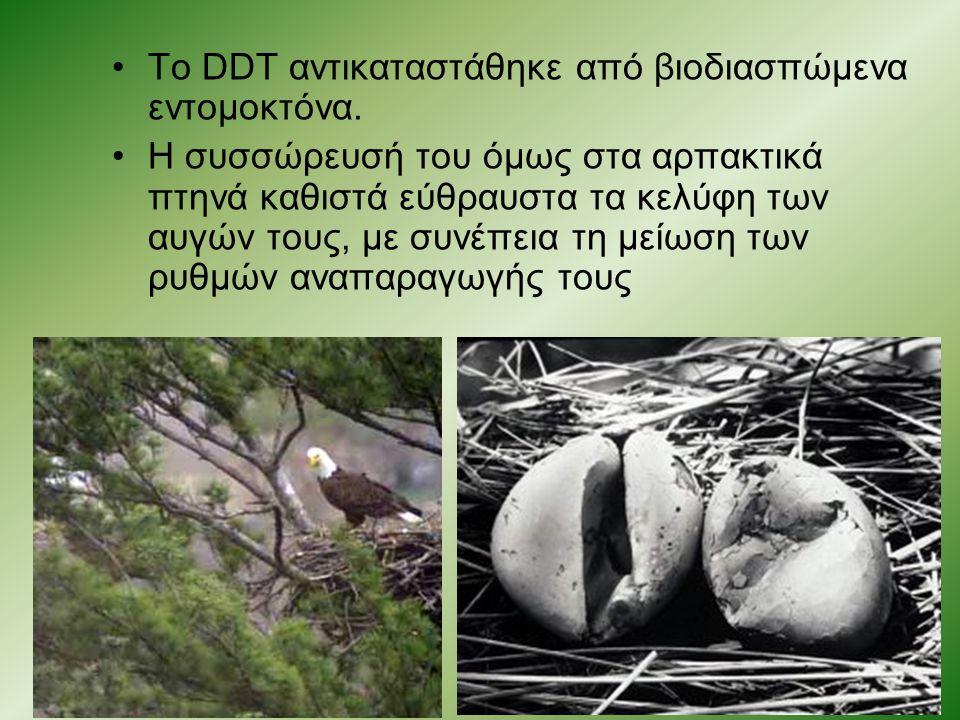 Το DDT αντικαταστάθηκε από βιοδιασπώμενα εντομοκτόνα. Η συσσώρευσή του όμως στα αρπακτικά πτηνά καθιστά εύθραυστα τα κελύφη των αυγών τους, με συνέπει
