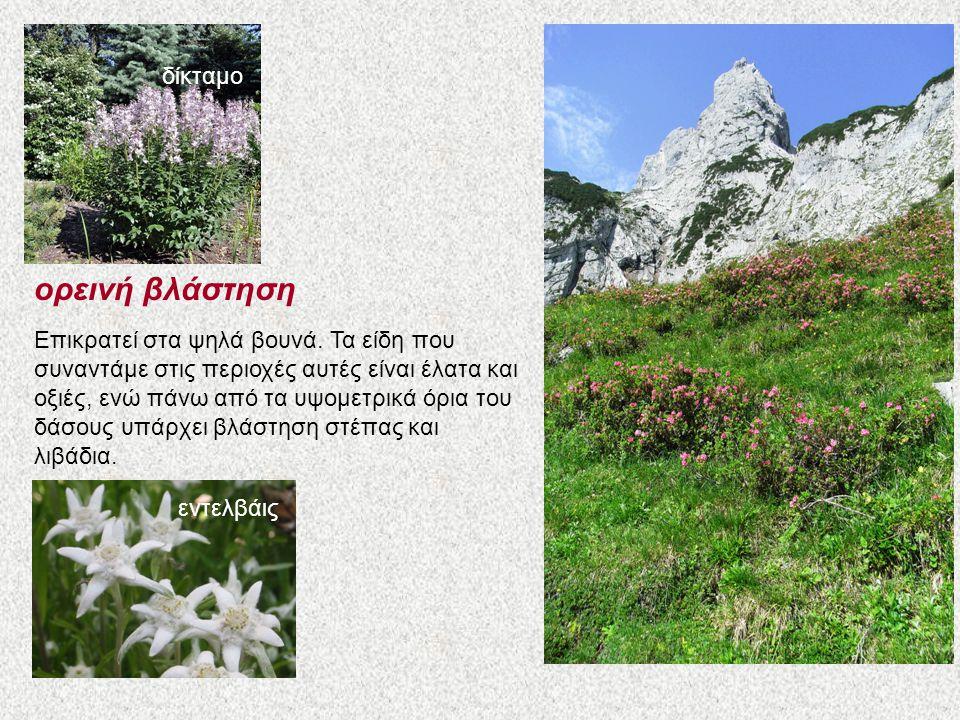 ορεινή βλάστηση Επικρατεί στα ψηλά βουνά. Τα είδη που συναντάμε στις περιοχές αυτές είναι έλατα και οξιές, ενώ πάνω από τα υψομετρικά όρια του δάσους