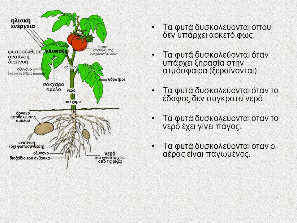 Τα φυτά δυσκολεύονται όπου δεν υπάρχει αρκετό φως. Τα φυτά δυσκολεύονται όταν υπάρχει ξηρασία στην ατμόσφαιρα (ξεραίνονται). Τα φυτά δυσκολεύονται ότα