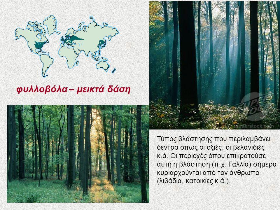 φυλλοβόλα – μεικτά δάση Τύπος βλάστησης που περιλαμβάνει δέντρα όπως οι οξιές, οι βελανιδιές κ.ά. Οι περιοχές όπου επικρατούσε αυτή η βλάστηση (π.χ. Γ
