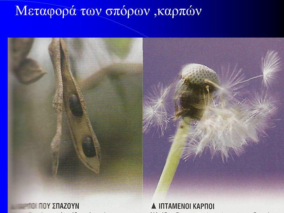 Μεταφορά των σπόρων,καρπών