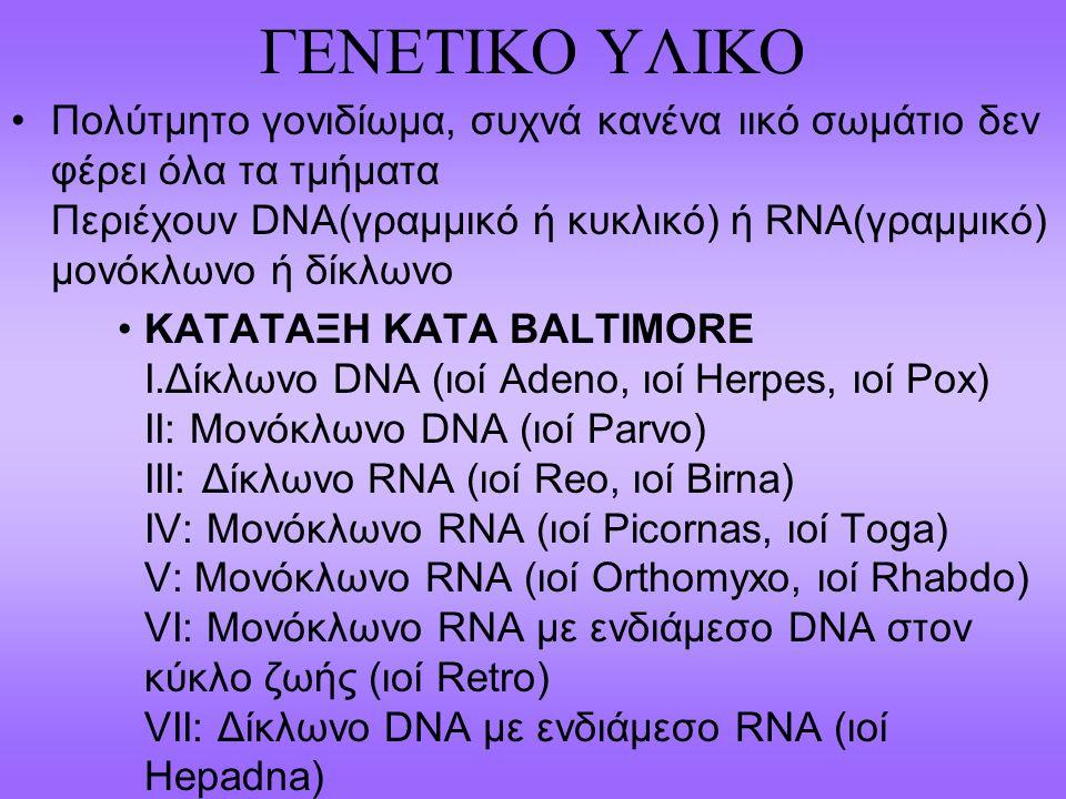 DNA Virus FamilyExamples (common names)Group AdenoviridaeAdenovirus (κοινό κρυολόγημα)hepatitis virusI PapillomaviridaePapillomavirusI ParviviridaeParvovirus B19, Canine parvovirusII Herpesviridae Herpes simplex virus, varicella-zoster virus, cytomegalovirus (εγκεφαλίτιδα σε νεογνά), Epstein-Barr virus (λοιμώδης μονοπυρήνωση) I PoxviridaeSmallpox virus (ευλογιά)I 6.HepadnaviridaeHepatitis B virusVII 7.Pοlyomaviridae Polyoma virus; JC virus (progressive multifocal leukoencephalopathy) I