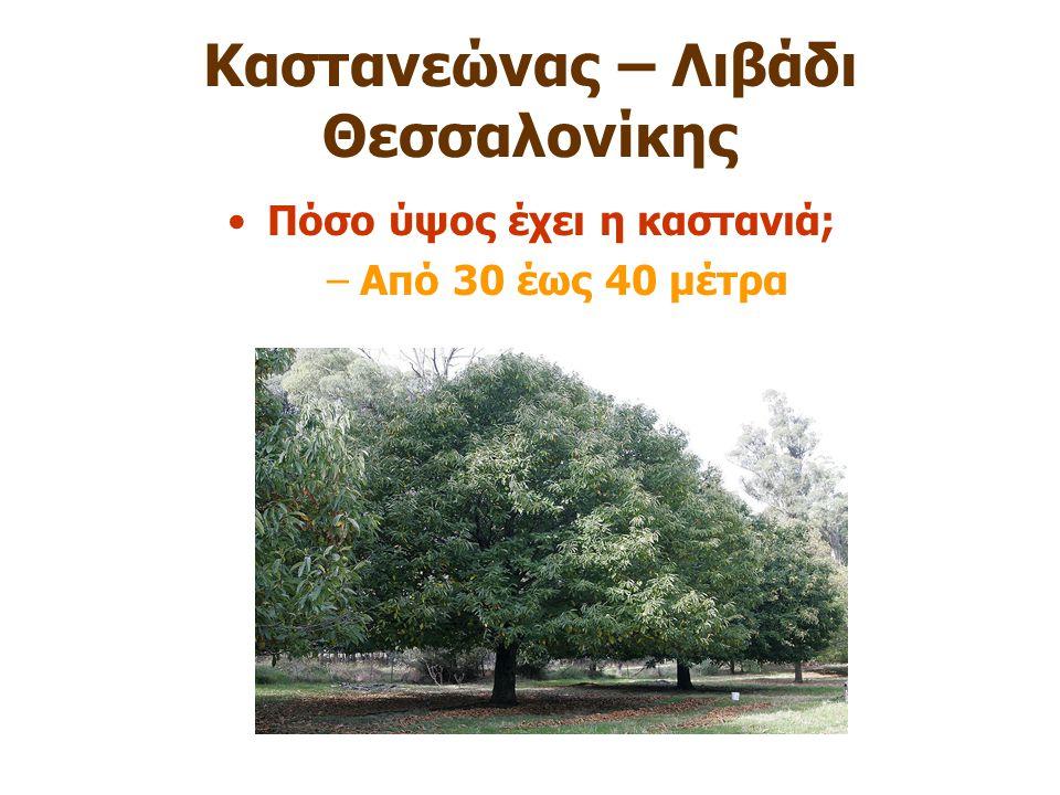Καστανεώνας – Λιβάδι Θεσσαλονίκης Πόσο ύψος έχει η καστανιά; –Από 30 έως 40 μέτρα