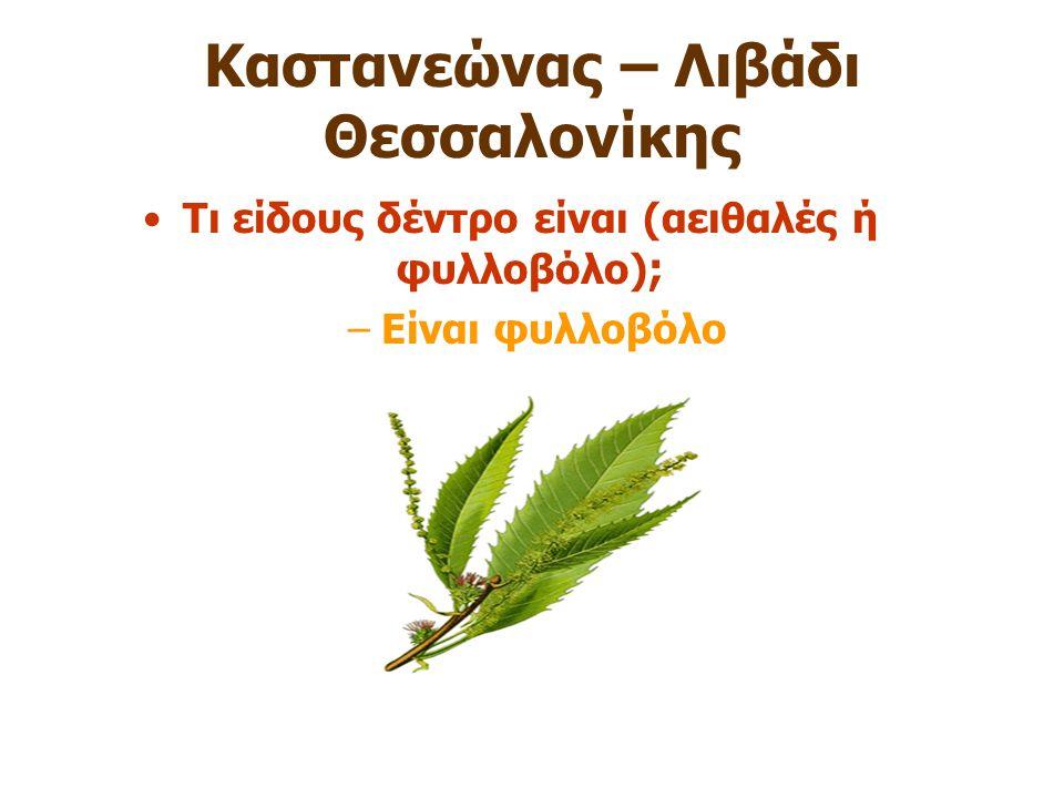 Καστανεώνας – Λιβάδι Θεσσαλονίκης Τι είδους δέντρο είναι (αειθαλές ή φυλλοβόλο) ; –Είναι φυλλοβόλο