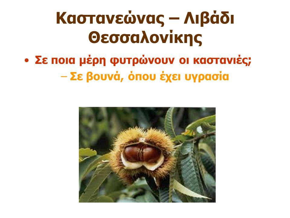 Καστανεώνας – Λιβάδι Θεσσαλονίκης Σε ποια μέρη φυτρώνουν οι καστανιές ; –Σε βουνά, όπου έχει υγρασία
