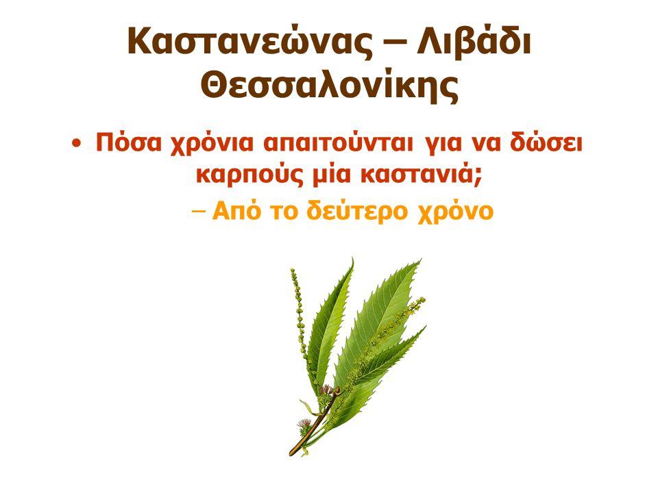 Καστανεώνας – Λιβάδι Θεσσαλονίκης Πόσα χρόνια απαιτούνται για να δώσει καρπούς μία καστανιά ; –Από το δεύτερο χρόνο
