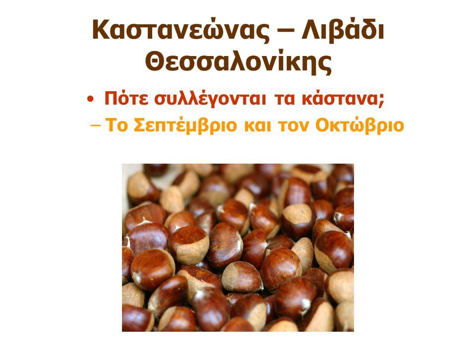 Καστανεώνας – Λιβάδι Θεσσαλονίκης Πότε συλλέγονται τα κάστανα ; –Το Σεπτέμβριο και τον Οκτώβριο
