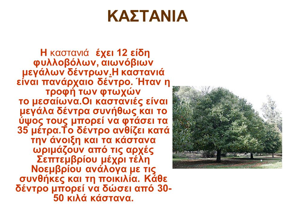 ΚΑΣΤΑΝΙΑ Η καστανιά έχει 12 είδη φυλλοβόλων, αιωνόβιων μεγάλων δέντρων.Η καστανιά είναι πανάρχαιο δέντρο. Ήταν η τροφή των φτωχών το μεσαίωνα.Οι καστα
