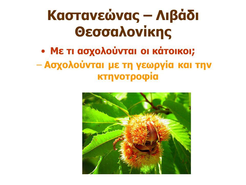 Καστανεώνας – Λιβάδι Θεσσαλονίκης Με τι ασχολούνται οι κάτοικοι ; –Ασχολούνται με τη γεωργία και την κτηνοτροφία