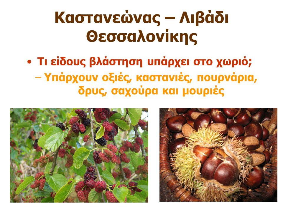 Καστανεώνας – Λιβάδι Θεσσαλονίκης Τι είδους βλάστηση υπάρχει στο χωριό ; –Υπάρχουν οξιές, καστανιές, πουρνάρια, δρυς, σαχούρα και μουριές
