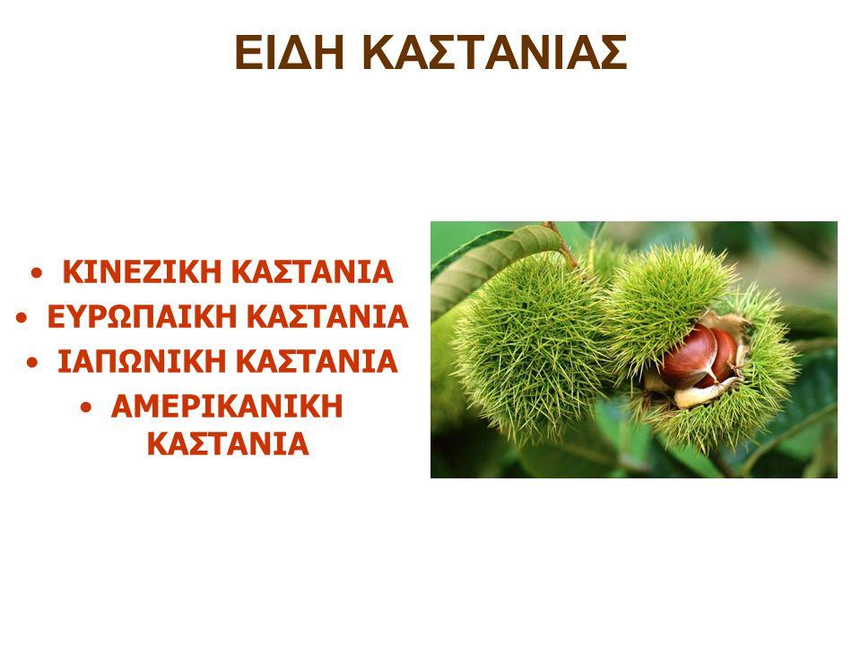 ΚΑΡΠΟΣ-ΚΑΣΤΑΝΟ Ο καρπός του κάστανου,βρίσκεται μέσα σε ένα ξυλώδες περίβλημα(ότι καλύπτει γύρω γύρω σε όλη του την επιφάνεια) που έχει αγκάθια εξωτερικά και ανοίγει όταν οι καρποί ωριμάσουν.
