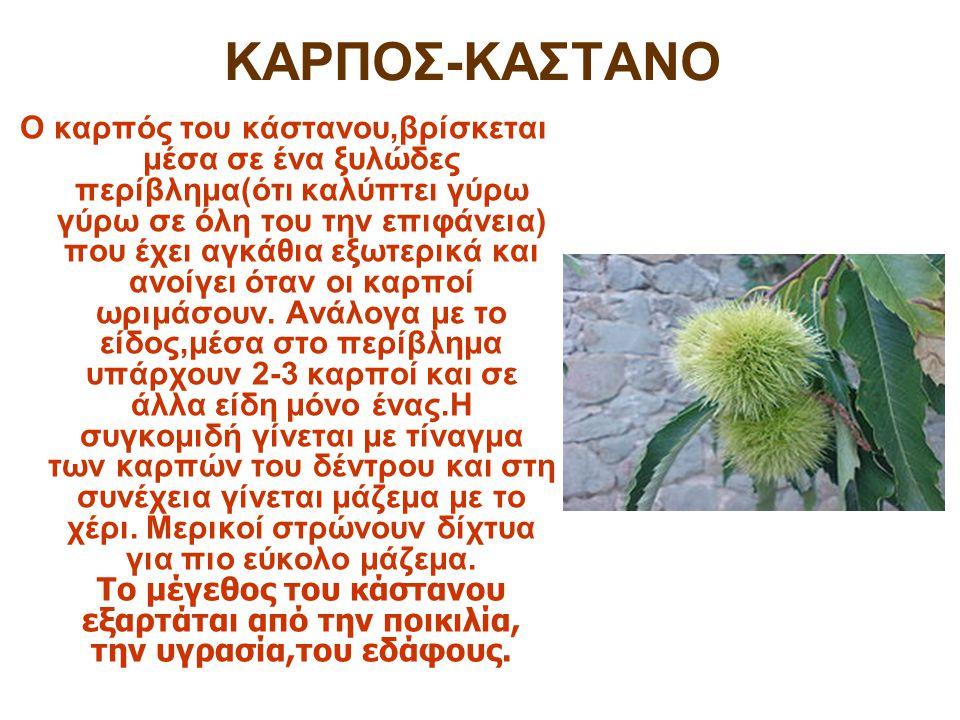 Καστανεώνας – Λιβάδι Θεσσαλονίκης Πότε γίνεται η γιορτή κάστανου ; –Η γιορτή κάστανου γίνεται στις 2 Νοεμβρίου