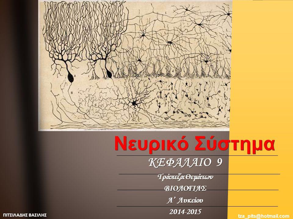 Το διάγραμμα παρουσιάζει την εικόνα του Εγκεφάλου, του Νωτιαίου Μυελού, καθώς και το τμήμα δύο οδών, μιας αισθητικής και μιας κινητικής, αφού εγκαταλείψουν τον Νωτιαίο Μυελό.