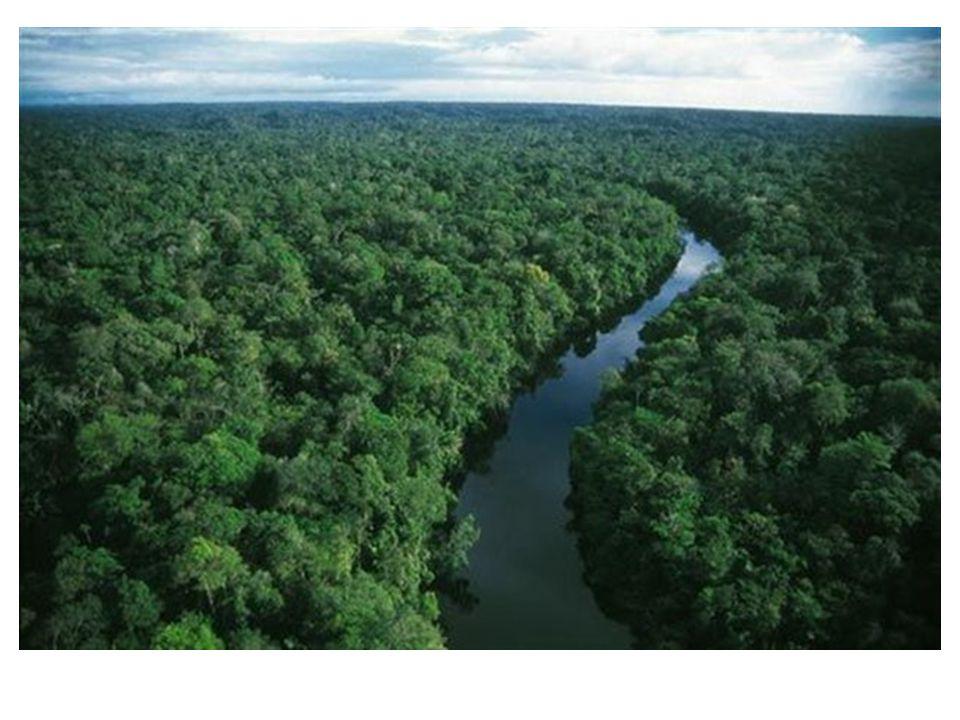 10 εντυπωσιακά τροπικά δάση του πλανήτη! 10 εντυπωσιακά τροπικά δάση του πλανήτη!