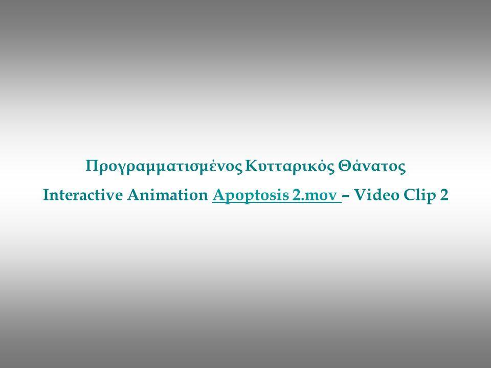 Προγραμματισμένος Κυτταρικός Θάνατος Interactive Animation Apoptosis 2.mov – Video Clip 2