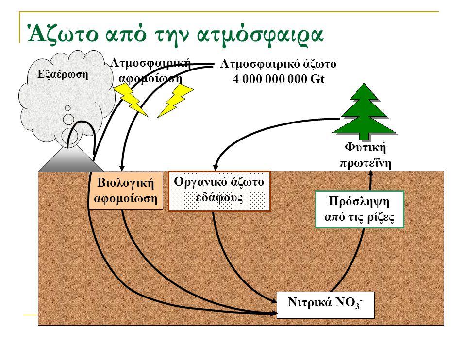 Πρόσληψη από τις ρίζες Νιτρικά NO 3 - Φυτική πρωτεΐνη Οργανικό άζωτο εδάφους Άζωτο από την ατμόσφαιρα Βιολογική αφομοίωση Ατμοσφαιρική αφομοίωση Εξαέρ